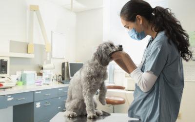 Voluntary Benefits Employees Want: Pet Insurance