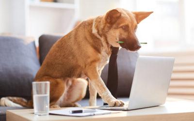 Should Your Office Go Pet-Friendly?
